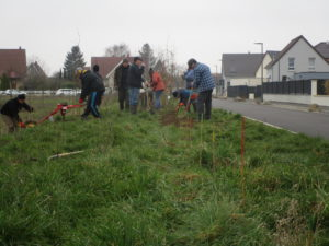 Participez aux premiers chantiers de plantation de haies cet automne à Schiltigheim @ Schiltigheim | Schiltigheim | Grand Est | France