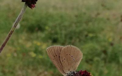 """[biodiversité] Alsace Nature demande l'abandon du projet actuel d""""extension de la Zone industrielle de Neuve-Eglise"""