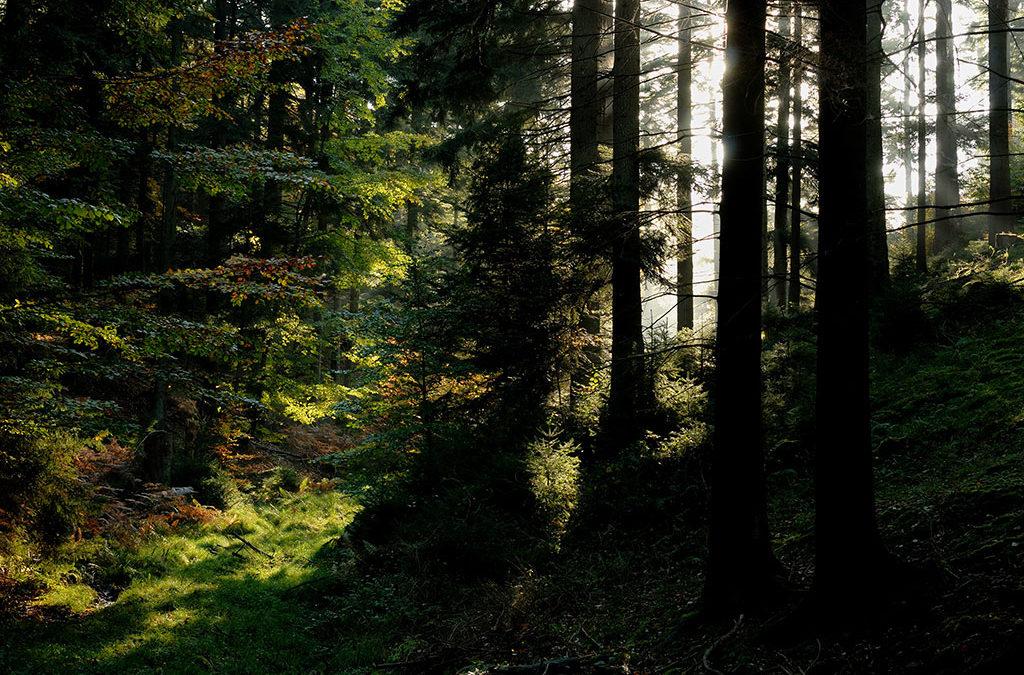 [Communiqué de presse] L'avenir de nos forêts ; Alsace Nature s'inquiète de l'artificialisation croissante