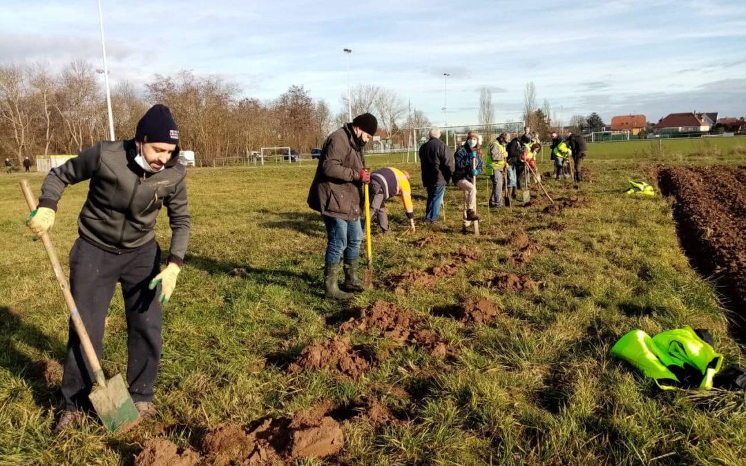 [Chantiers Nature] Alsace Nature et ses partenaires engagés pour la Trame Verte et Bleue: les premières plantations