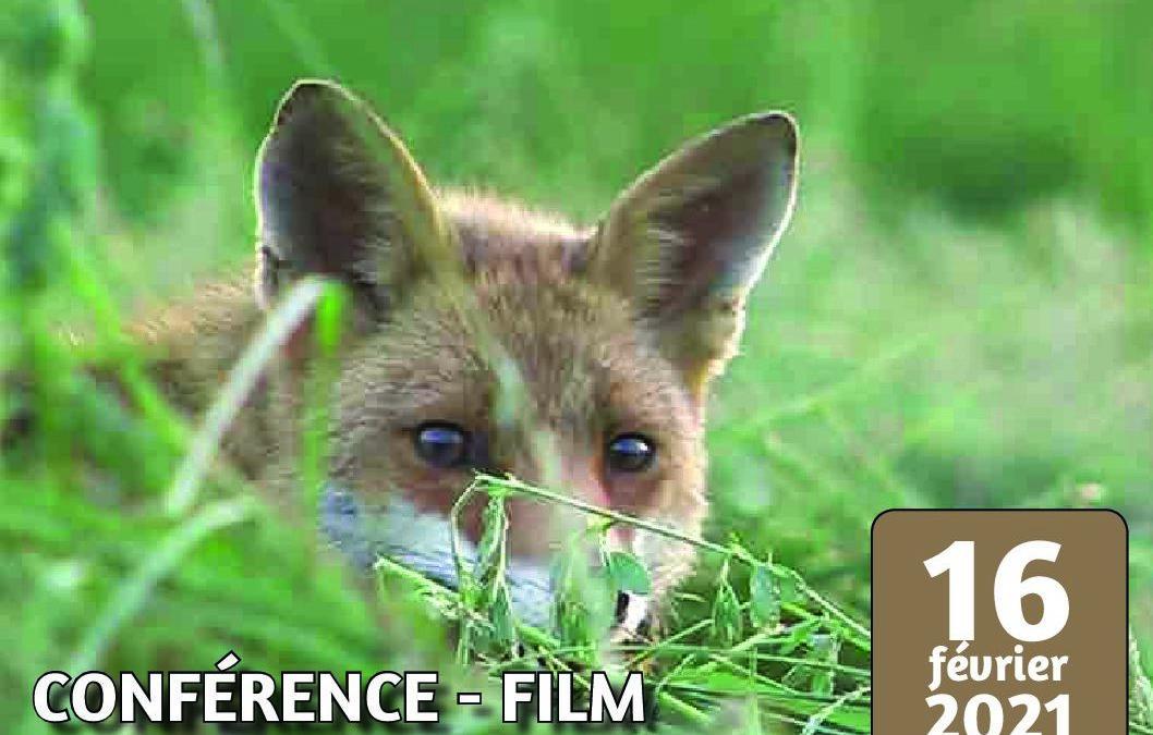Conférence Mardi Nature 16 février 2021: Le Renard roux, et si on en parlait?