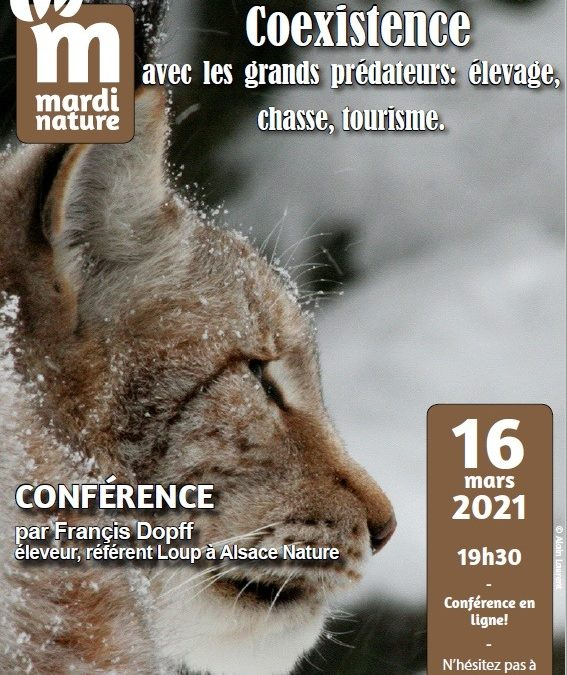 Mardi Nature (en visio): Co-existence avec les grands prédateurs