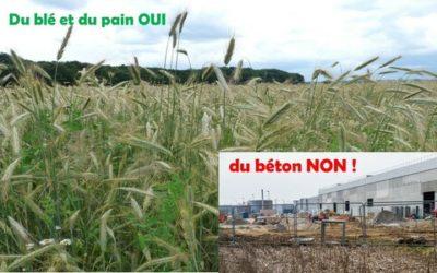 STOP au bétonnage des terres agricoles à HATTEN !