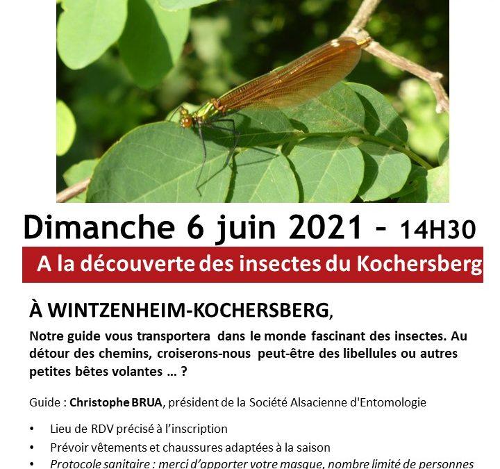 [Sortie Nature] A la découverte des insectes du Kochersberg