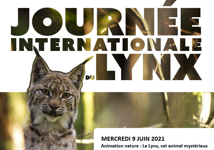 [Animation Nature] le Lynx, cet animal mystérieux
