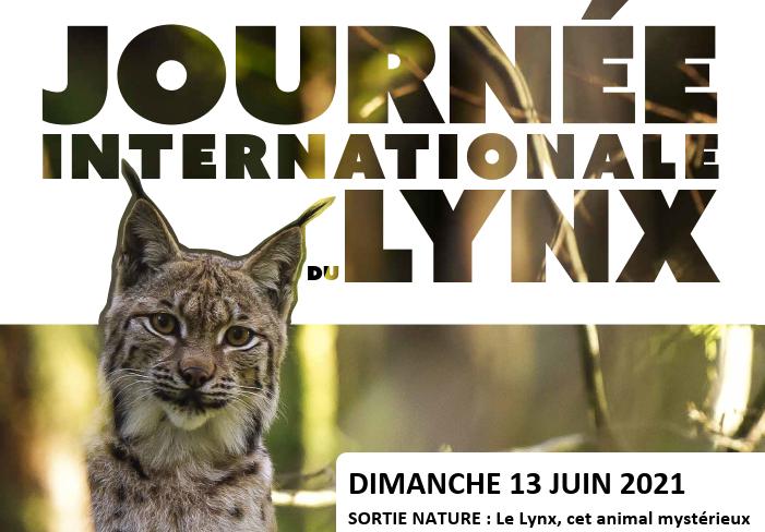 [Sortie Nature] Le Lynx, cet animal mystérieux