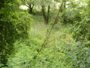 """[Sortie nature] """"Sur les traces du Vivier des Pèlerins"""" @ entre Buhl et Murbach"""