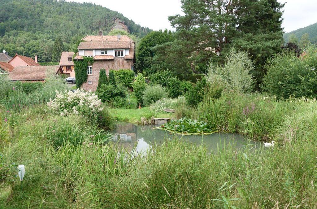 Visite du célèbre jardin HYMENOPTERA