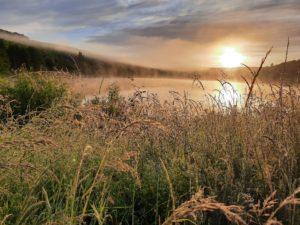[balade contée] Découverte botanique autour du lac de Reichshoffen @ Reichshoffen, réserve naturelle du plan d'eau | Reichshoffen | Grand Est | France